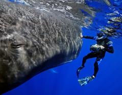 PeterAllinson_SpermWhale2_oceans