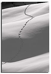 Tracks-in-Snow-II-Lg.jpg