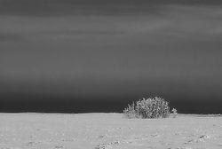 DSC0457Infrared.jpg