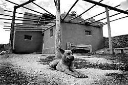 Taos_Dog_B_W.jpg