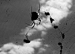 spider_web_and_food1.jpg