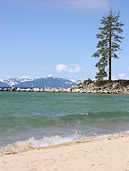 Sand_Harbor_Lone_Tree.JPG