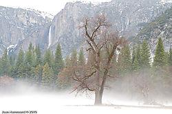 Yosemite-7951.jpg