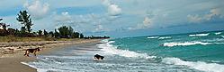 dogs_ocean5_edited-1-1.JPG
