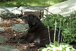 Olive_in_the_Garden.jpg