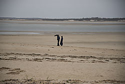 DSC_0558_-_Couple_on_the_Beach_-_More_Distant_050116.jpg