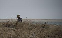 DSC_8154_-_Vickie_on_the_Dunes.jpg