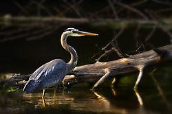 Heron_Surveying_Sm.jpg