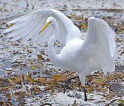 Nikon_Bird_Contest1024Wide.jpg