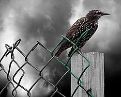 Storm_Bird.jpg