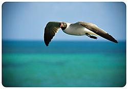 bird-23.jpg