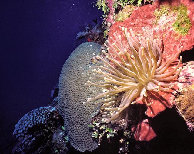 Coral_Wall_Garden