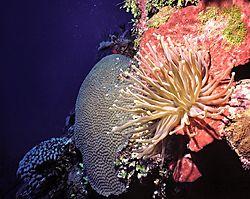 Coral_Wall_Garden.jpg