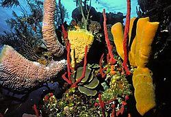 Sponge_Gardens.jpg