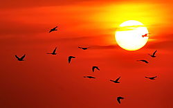Sunrise_with_Birds_Cape_May_082109.jpg