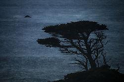 Point_Lobos.jpg