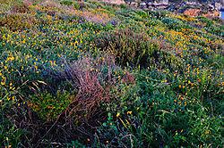 Point_Lobos_180.JPG