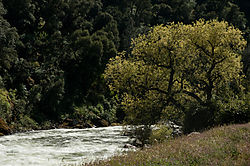 Tree_at_the_Riverside.jpg