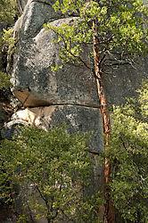 Trees_and_Rocks.jpg
