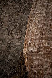 Wood_and_Stone.jpg