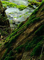 Todd_Jackson_Yosemite-7324.jpg