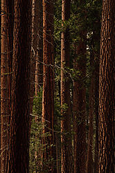 Todd_Jackson_Yosemite-7426.jpg