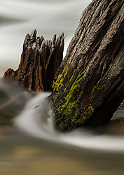 Todd_Jackson_Yosemite-7976.jpg