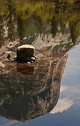 Todd_Jackson_Yosemite-8037.jpg
