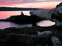SunsetStewartDuck-NK.jpg