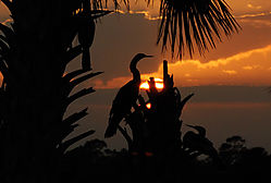 fla_sunset.jpg