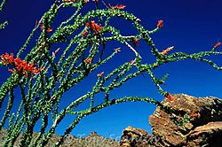 Ocotillo-Fall.jpg