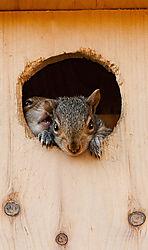 Baby_Squirrels_WB.jpg