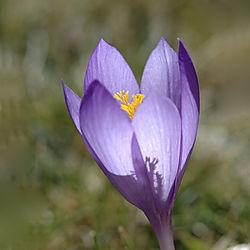 Flower_019.jpg