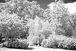 070310_4629weeping-willow_web.jpg