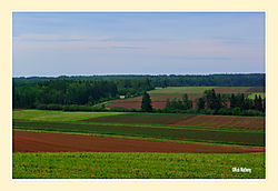 Farmland1.jpg