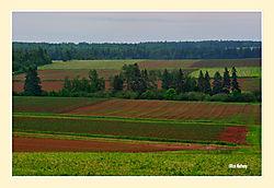 Farmland3.jpg