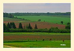 Farmland4.jpg