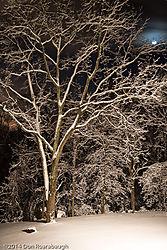 Moon_after_fresh_snow.jpg