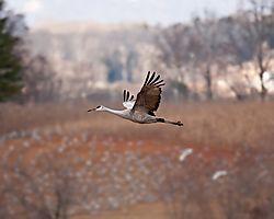 20110108_Hiawassee_Wildlife_Refuge-124.jpg