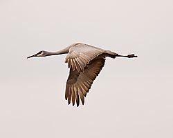 20110108_Hiawassee_Wildlife_Refuge-167.jpg