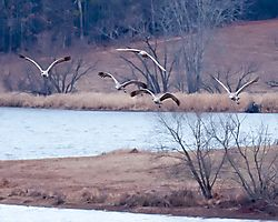 20110108_Hiawassee_Wildlife_Refuge-20.jpg
