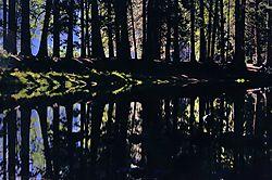 ANPAT_8_Yosemite.jpg