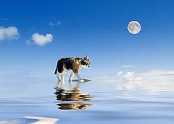 Cat_Moonwalknikon.jpg