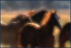 MANES_IN_DAWN_LIGHT_.jpg