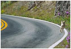 coyote-curve.jpg