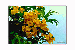 VNM0031_yelo_flower_wc_cap.jpg