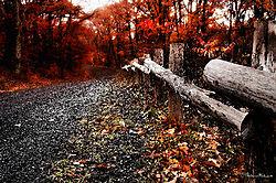 VNM9494_fence_road_sm.jpg
