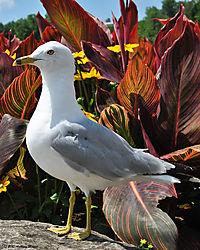 Seagull8.jpg