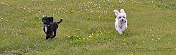 2010-06-29_Beth_and_dogs_036_1024x325_wtmk.jpg