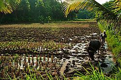 rice_farmers.jpg